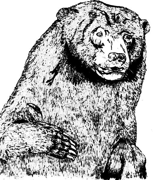 Crack Bear